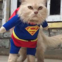 BAJU UNTUK KUCING ANJING KARAKTER SUPERMAN SUPER HERO
