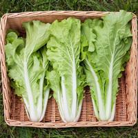 Sayur Sayuran Segar Jakarta FRESH Sawi Keriting 250 Gram