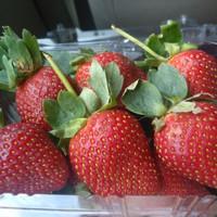 Buah Strawberry Strawberries Segar Fresh Jepang 250gr Murah