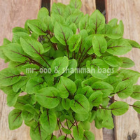 Microgreens - Sorrel Red Veined - +/-300 Benih-Repack Benih USA