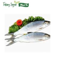 ikan bandeng segar 500gr