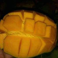 buah mangga harum manis masak pohon 1kg