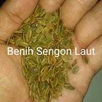 Benih Sengon Laut 500 gram