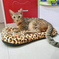 kasur matras bantal pet kucing anjing dll alas anti slip kain bintik