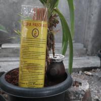 Dupa Herbal Aroma Melati | Dupa Pasopati / Pasupati