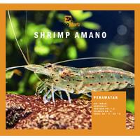 Amano Shrimps / Algae Eater / Udang Amano Import / Aquascape