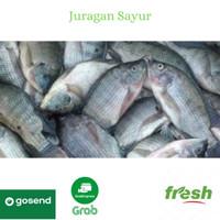 Ikan Nila Segar asli dari tambak