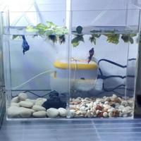 Aquarium Cupang 24x10x20 Sekat 2 Ruang Bahan 3&2 mm Akuarium Soliter