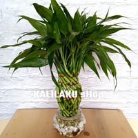 Paket guci mini /Bambu Hoki/pajangan meja/hiasan ruangan tamu/kado