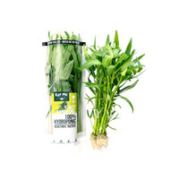 Sayur Kangkung Hidroponik Perpack - Eat Me Brand