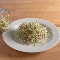 Microgreens Alfalfa Organik Sprout - 50 Gram - Repack Benih USA