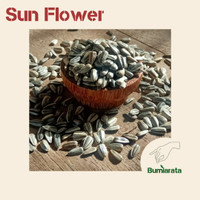 [ Termurah ] Benih Bunga Matahari - Biji Sun Flower - Microgreens Seed