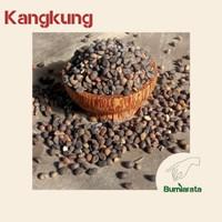 [ Termurah ] Benih Kangkung - Biji Kangkung - Benih microgreens