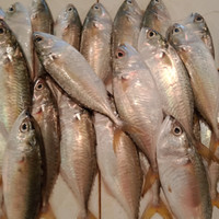 ikan kembung segar fresh 500gr