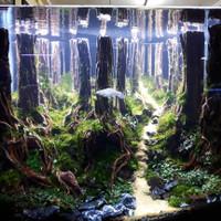 Aquarium Aquascape Full Set Design Tema Jungle Style 1