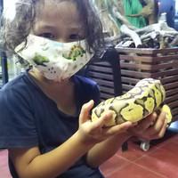 Ball python phyton super pastel male