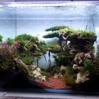 Aquarium Aquascape Full Set Design Tema Jungle Style