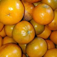 jeruk medan super manis 5 kg