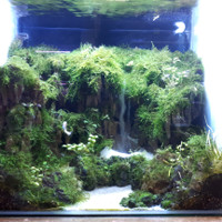 Aquarium Aquascape Full Set Design Tema Jungle Style 3