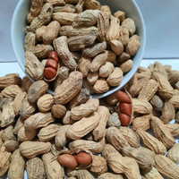 SGS Kacang Tanah Kacang kulit sangrai