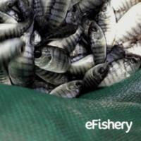 eFisheryFresh Ikan Nila - Bandung