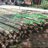 bambu tali / apus utk steger diameter 5/7 panjang 6 m