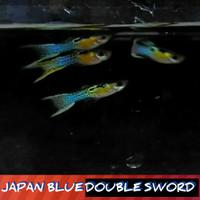 Ikan Guppy Japan Blue Double sword Sepasang