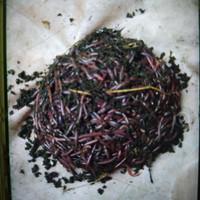 cacing tanah hidup merah. 500gr