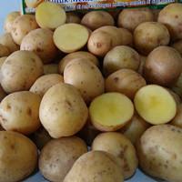 kentang rendang baby potato 500gr