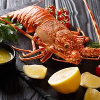 Lobster laut Dinosaur fresh grill 600-700 gr