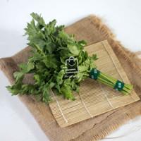 Daun Seledri Sop Pack / Sayur Sayuran Curah