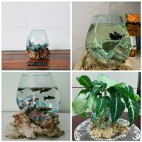 Glass on wood vase / pot kaktus/vas kaca/ pot kecil/ aquarium cupang - Sedang