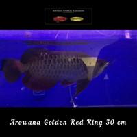 Arowana / arwana Golden Red king 30 cm