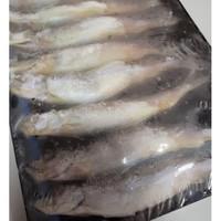Ikan Shisamo Tray / Shisamo isi 8 ekor
