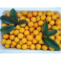 1 Kg - Orange Kimkit Import | Buah Jeruk Kimkit (100% Fresh)