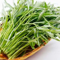 sayur kangkung fresh