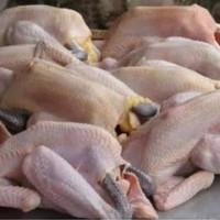 ayam kampung segar pesan baru di potong ukuran 800/900 gram