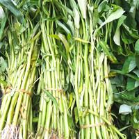 Kangkung/Sayur Segar/Pedagang Sayur/Pasar moderen online-per ikat