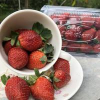 Buah Strawberry Segar Fresh