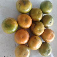 Jeruk medan manis size 12 sd 13 pcs dalam 1 kg