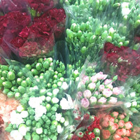 Bunga Anyelir Carnation Segar Asli per ikat