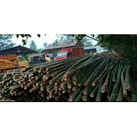 bambu steger 5/6/7 panjang 6m