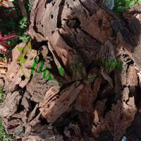 Kayu Aquascape - DriftWood 40-60cm