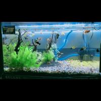 Aquascape Jadi / Tanaman / Ikan / Batu / Pasir Malang / Aquarium Bend