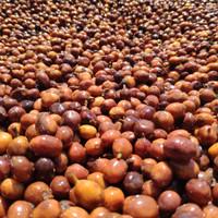 Argopuro Natural Anaerob (biji kopi)