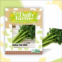 DF benih seledri CELLERY TALL UTAH 400 butir daun sup batang besar