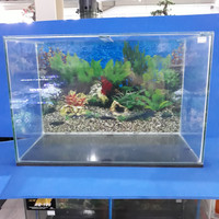 Aquarium kaca 60cm ( GOJEK GRAB ONLY)