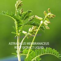 Astragalus Membranaceus Root Extract Liqui 50ml/Cosmetic Grade