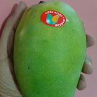 buah mangga harum manis murah 1kg