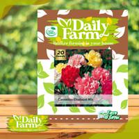 DF benih bunga CARNATION CHABAUD MIX 20 butir bibit anyelir daily farm